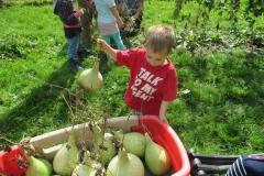 gourdharvest